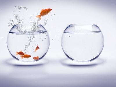 Wie ein Fisch im Wasser Emotionen